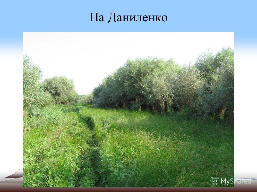 На Даниленко