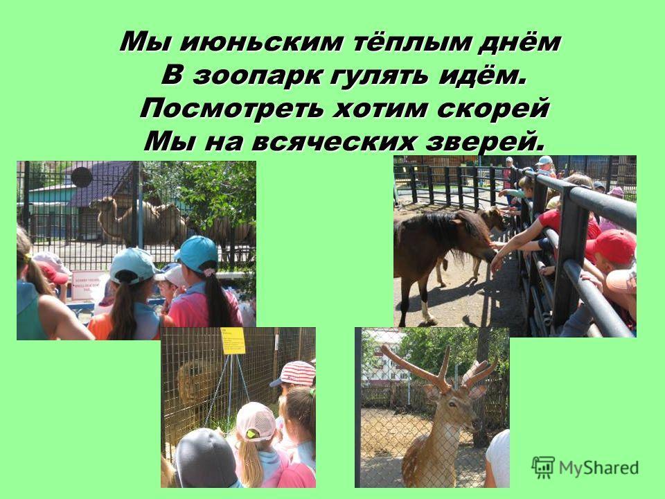 Мы июньским тёплым днём В зоопарк гулять идём. Посмотреть хотим скорей Мы на всяческих зверей.