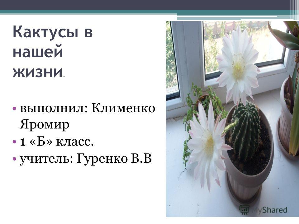 Кактусы в нашей жизни. выполнил: Клименко Яромир 1 «Б» класс. учитель: Гуренко В.В