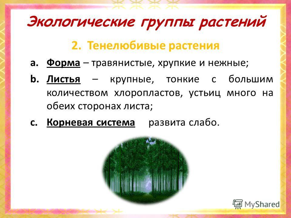 Экологические группы растений 2. Тенелюбивые растения a.Форма – травянистые, хрупкие и нежные; b.Листья – крупные, тонкие с большим количеством хлоропластов, устьиц много на обеих сторонах листа; c.Корневая система развита слабо.
