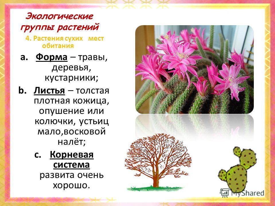 Экологические группы растений 4. Растения сухих мест обитания a.Форма – травы, деревья, кустарники; b.Листья – толстая плотная кожица, опушение или колючки, устьиц мало,восковой налёт; c.Корневая система развита очень хорошо.