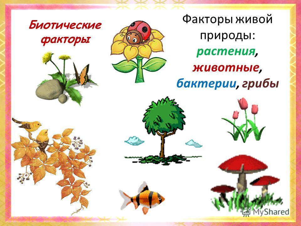 Биотические факторы Факторы живой природы: растения, животные, бактерии, грибы
