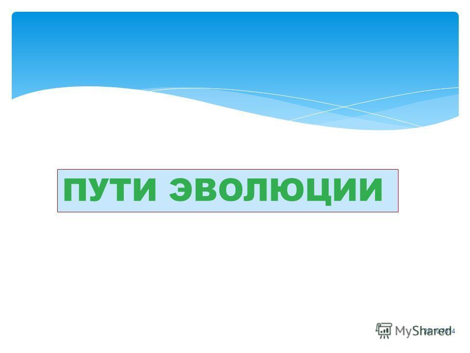 28.10.2014 ПУТИ ЭВОЛЮЦИИ