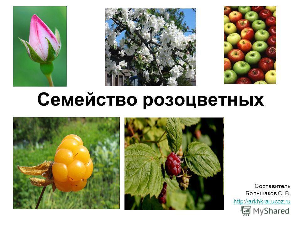 Семейство розоцветных Составитель Большаков С. В. http://arkhkrai.ucoz.ru