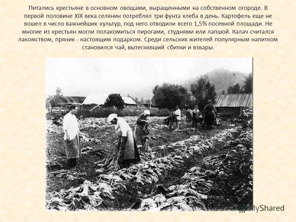Питались крестьяне в основном овощами, выращенными на собственном огороде. В первой половине XIX века селянин потреблял три фунта хлеба в день. Картофель еще не вошел в число важнейших культур, под него отводили всего 1,5% посевной площади. Не многие