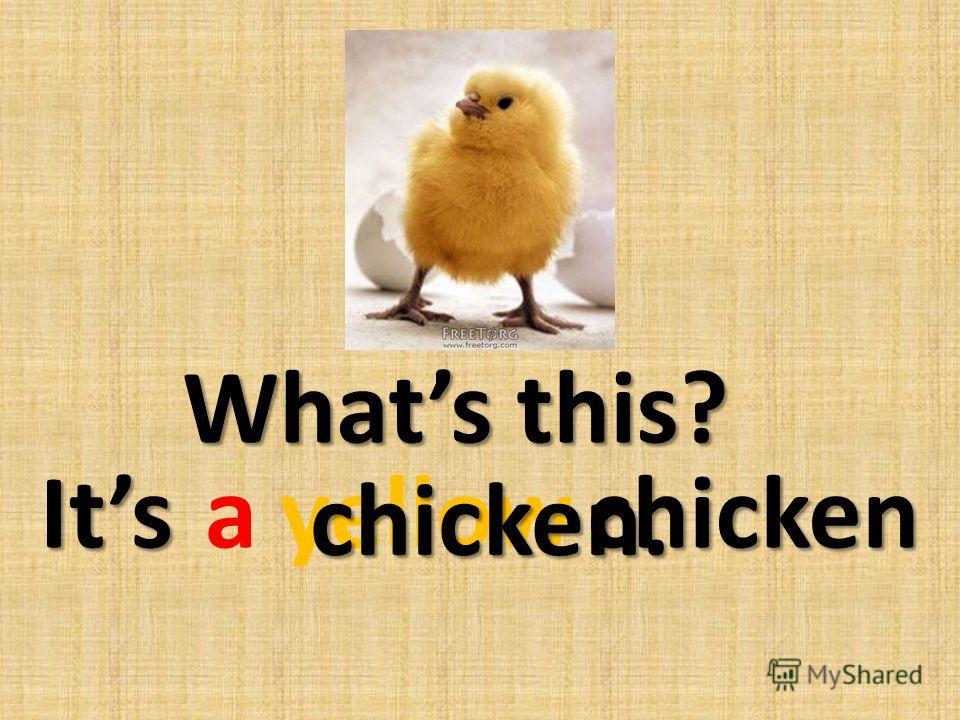 ayellowchicken chicken. Whats this? Its