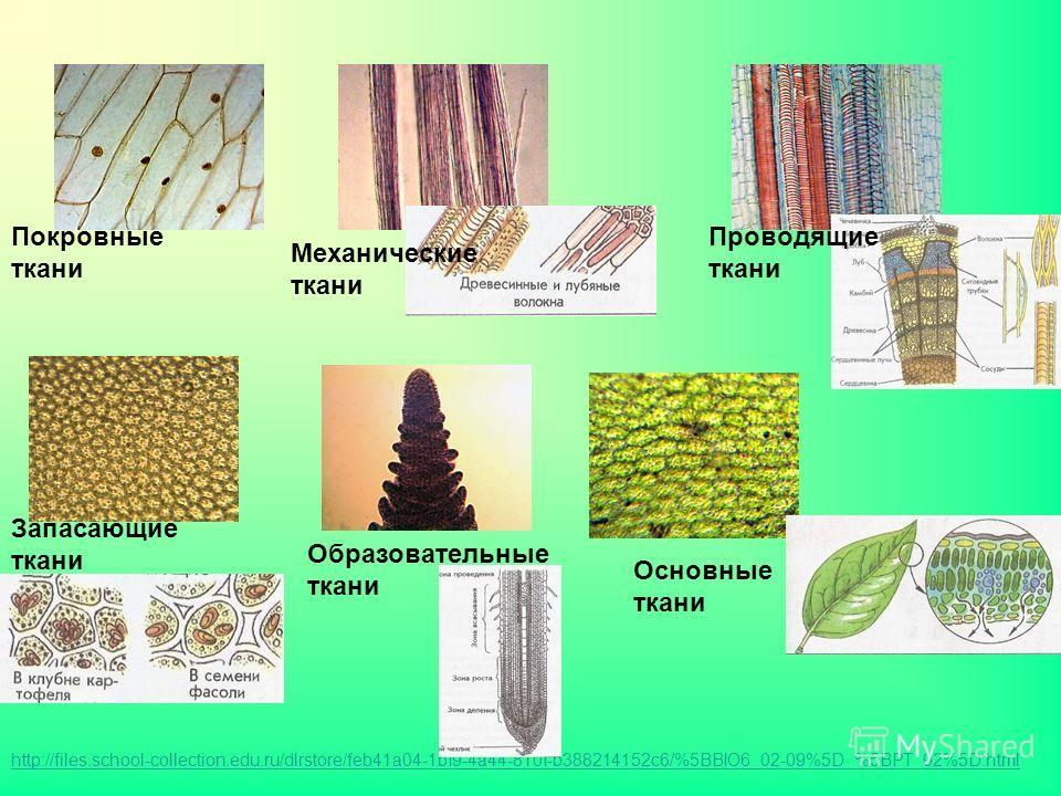 Покровные ткани Запасающие ткани Образовательные ткани Основные ткани http://files.school-collection.edu.ru/dlrstore/feb41a04-1bf9-4a44-810f-b388214152c6/%5BBIO6_02-09%5D_%5BPT_02%5D.html Механические ткани Проводящие ткани