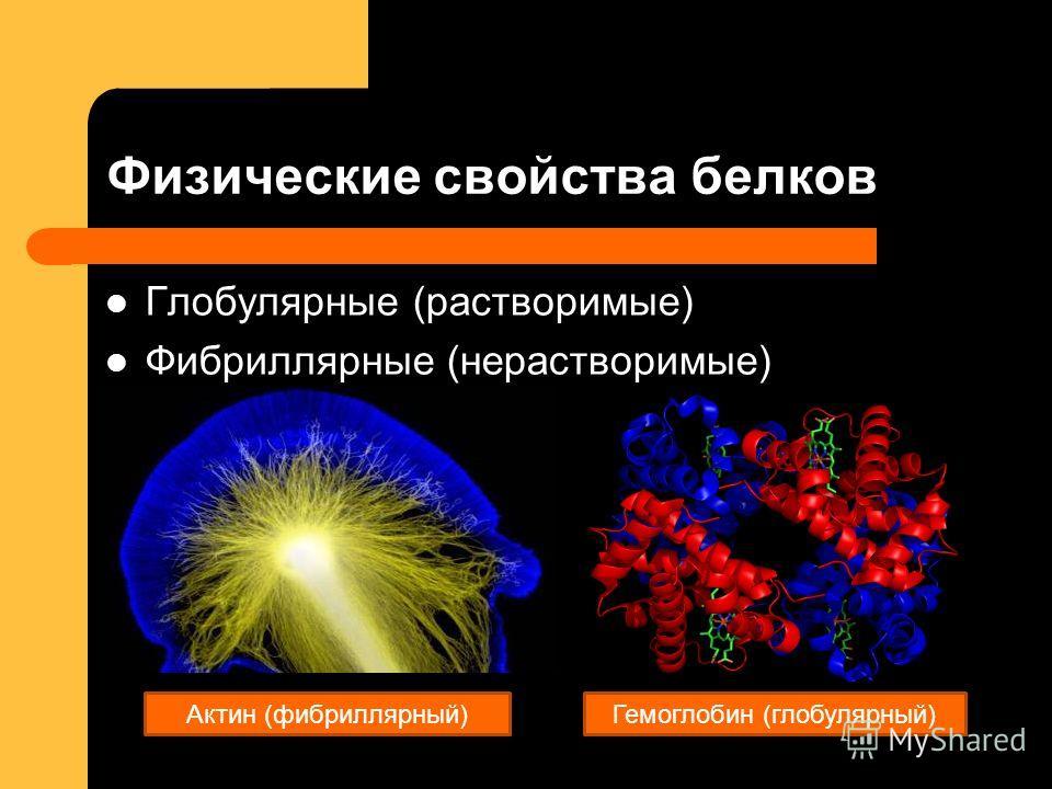 Физические свойства белков Глобулярные (растворимые) Фибриллярные (нерастворимые) Актин (фибриллярный) Гемоглобин (глобулярный)