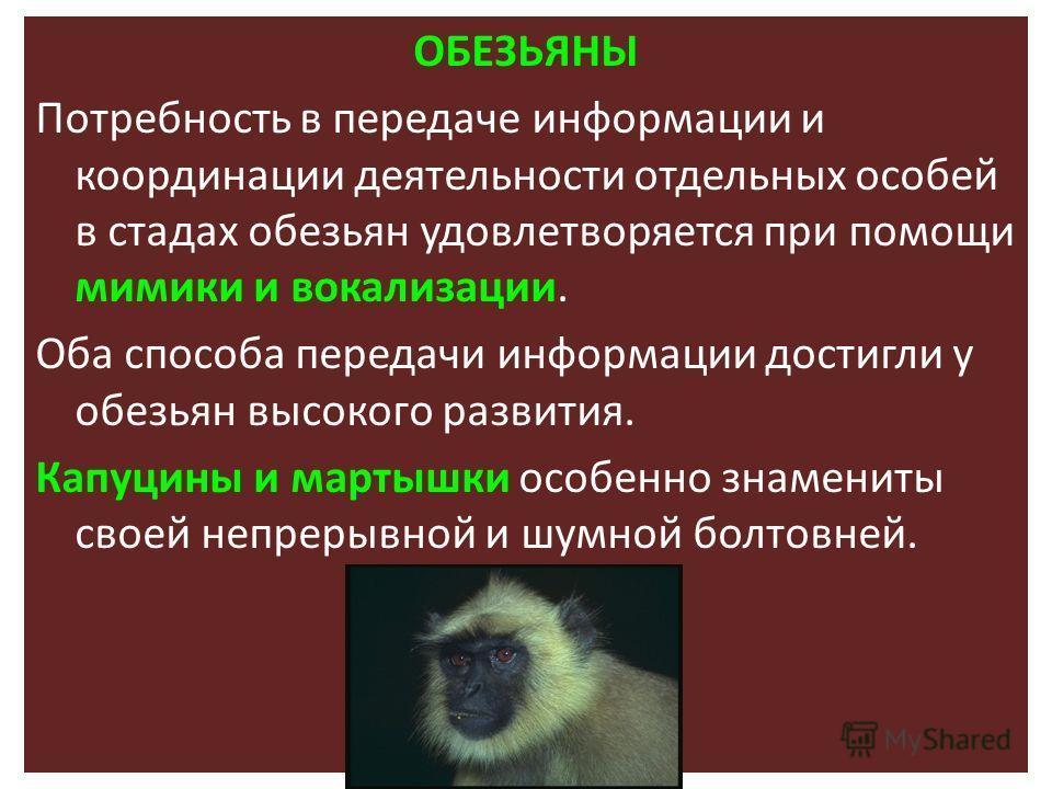 ОБЕЗЬЯНЫ Потребность в передаче информации и координации деятельности отдельных особей в стадах обезьян удовлетворяется при помощи мимики и вокализации. Оба способа передачи информации достигли у обезьян высокого развития. Капуцины и мартышки особенн