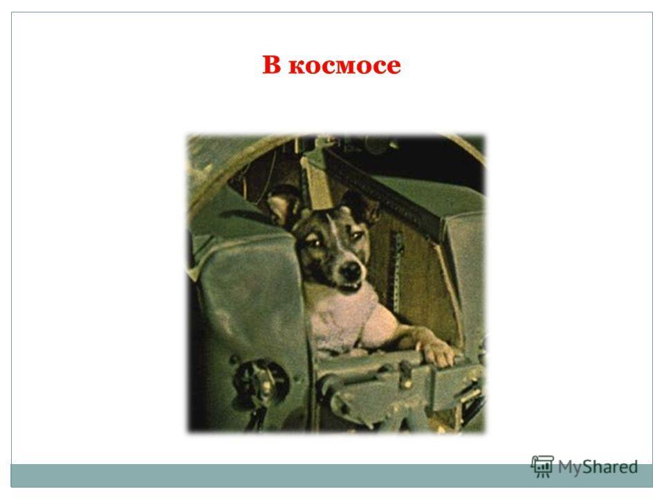 Погода ульяновск завтра 24