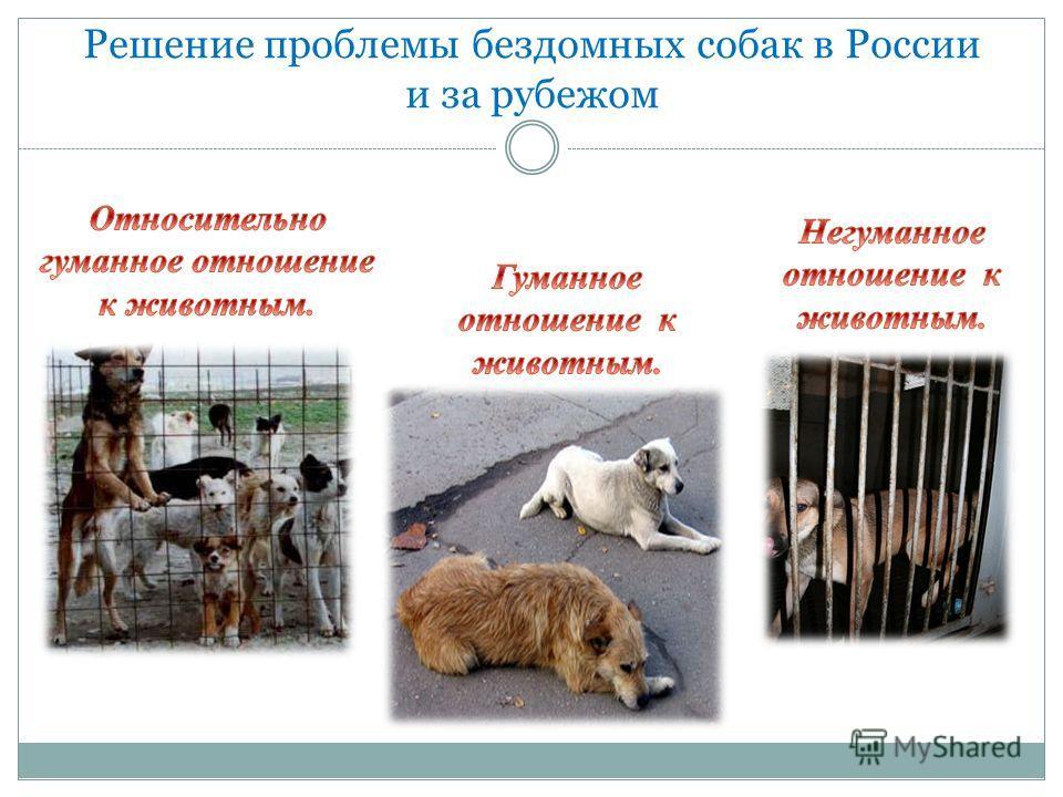 Решение проблемы бездомных собак в России и за рубежом