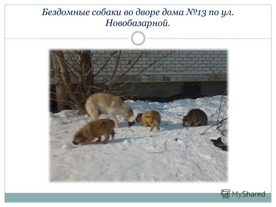 Бездомные собаки во дворе дома 13 по ул. Новобазарной.