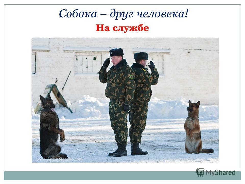 Собака – друг человека!