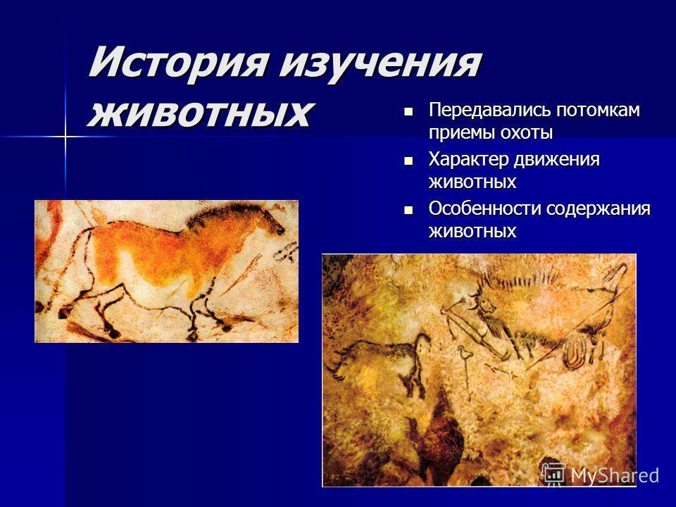 История изучения животных Передавались потомкам приемы охоты Передавались потомкам приемы охоты Характер движения животных Характер движения животных Особенности содержания животных Особенности содержания животных