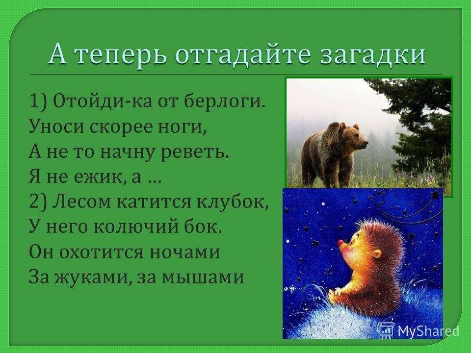 Дикие животные - животные, которые живут в лесах, сами заботятся о потомстве, сами строят дома, добывают пищу
