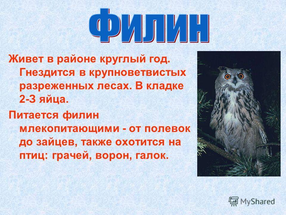 Живет в районе круглый год. Гнездится в крупноветвистых разреженных лесах. В кладке 2-З яйца. Питается филин млекопитающими - от полевок до зайцев, также охотится на птиц: грачей, ворон, галок.