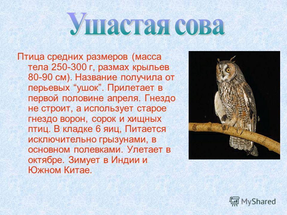 Птица средних размеров (масса тела 250-300 г, размах крыльев 80-90 см). Название получила от перьевых ушек. Прилетает в первой половине апреля. Гнездо не строит, а использует старое гнездо ворон, сорок и хищных птиц. В кладке 6 яиц, Питается исключит