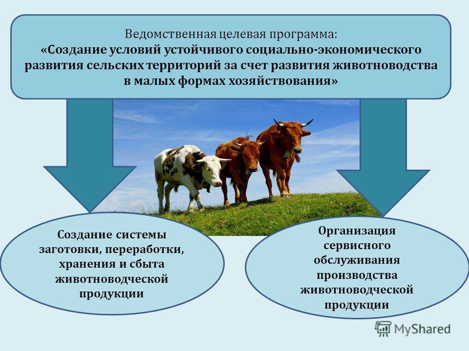 Создание системы заготовки, переработки, хранения и сбыта животноводческой продукции Организация сервисного обслуживания производства животноводческой продукции Ведомственная целевая программа: «Создание условий устойчивого социально-экономического р