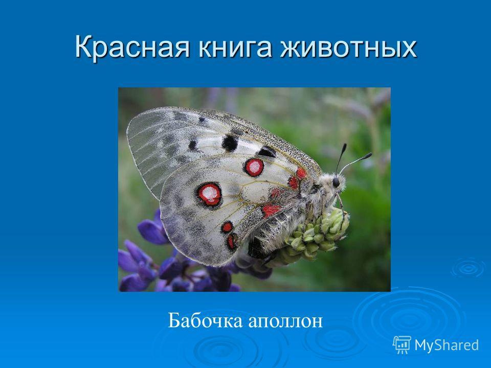 Красная книга животных Бабочка аполлон