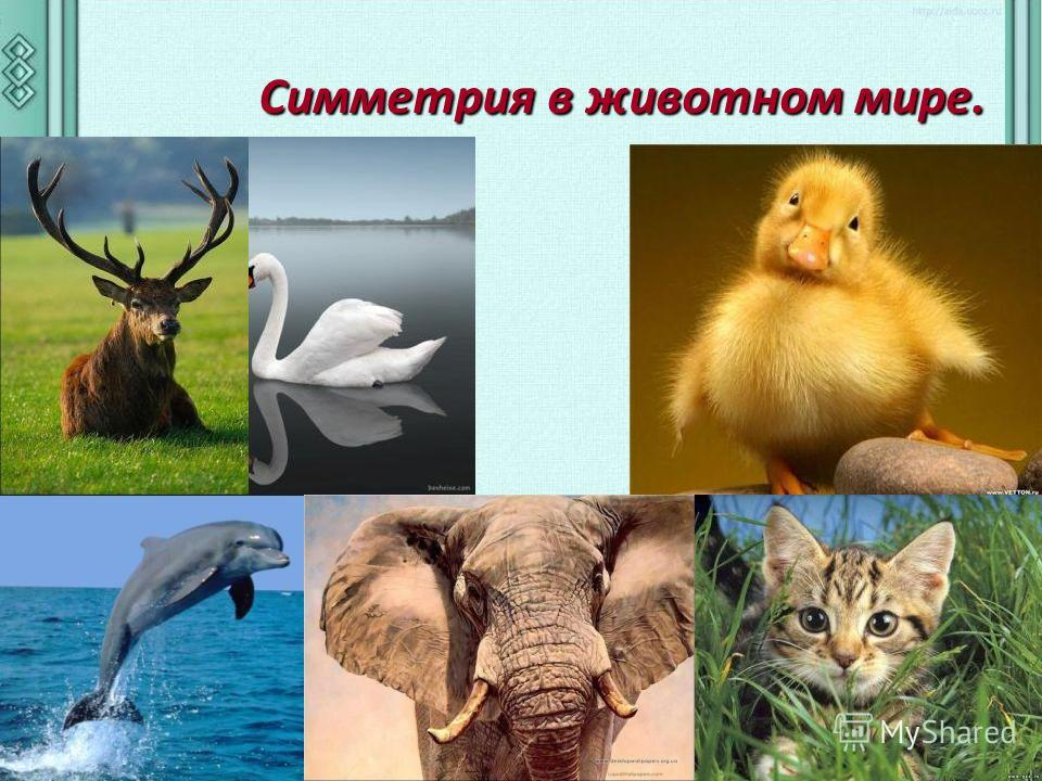 Симметрия в животном мире. Симметрия в животном мире.