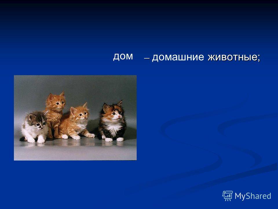 – домашние животные; дом