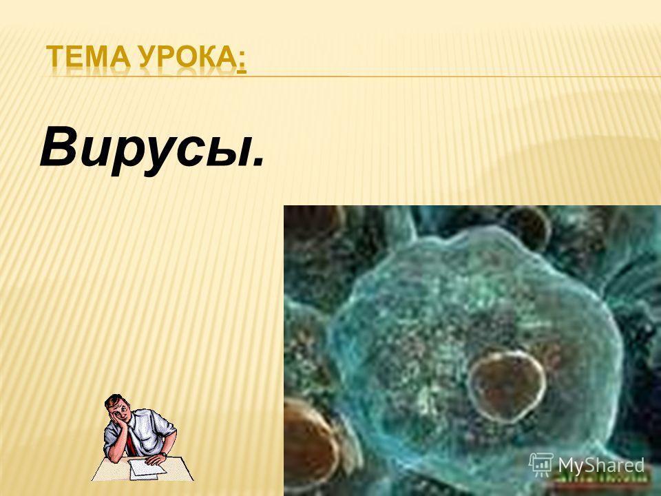 Вирусы.