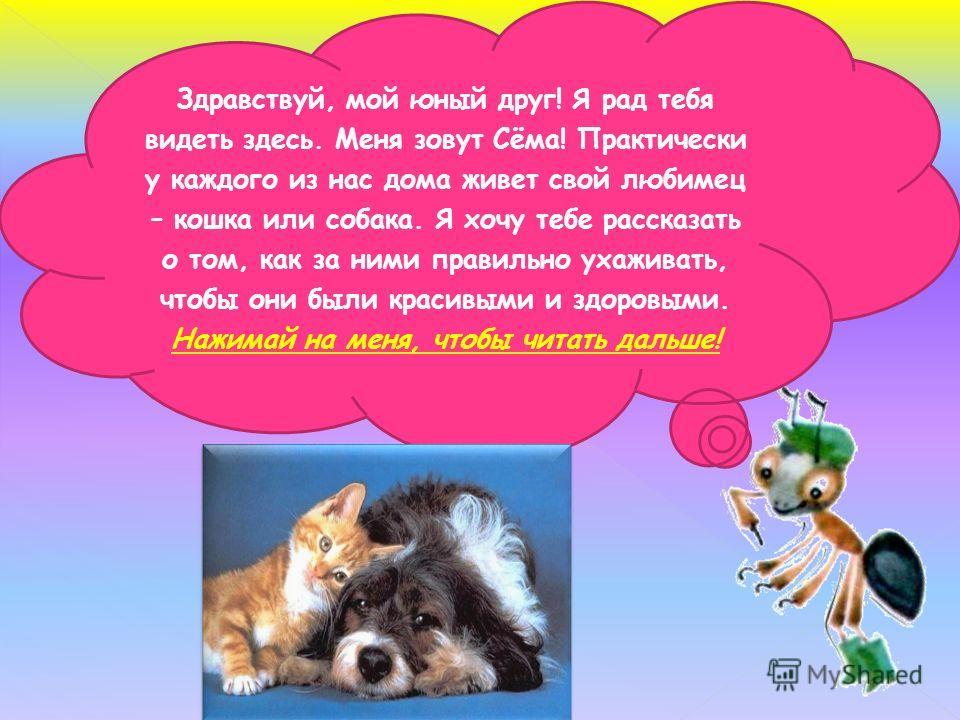 Здравствуй, мой юный друг! Я рад тебя видеть здесь. Меня зовут Сёма! Практически у каждого из нас дома живет свой любимец – кошка или собака. Я хочу тебе рассказать о том, как за ними правильно ухаживать, чтобы они были красивыми и здоровыми. Нажимай