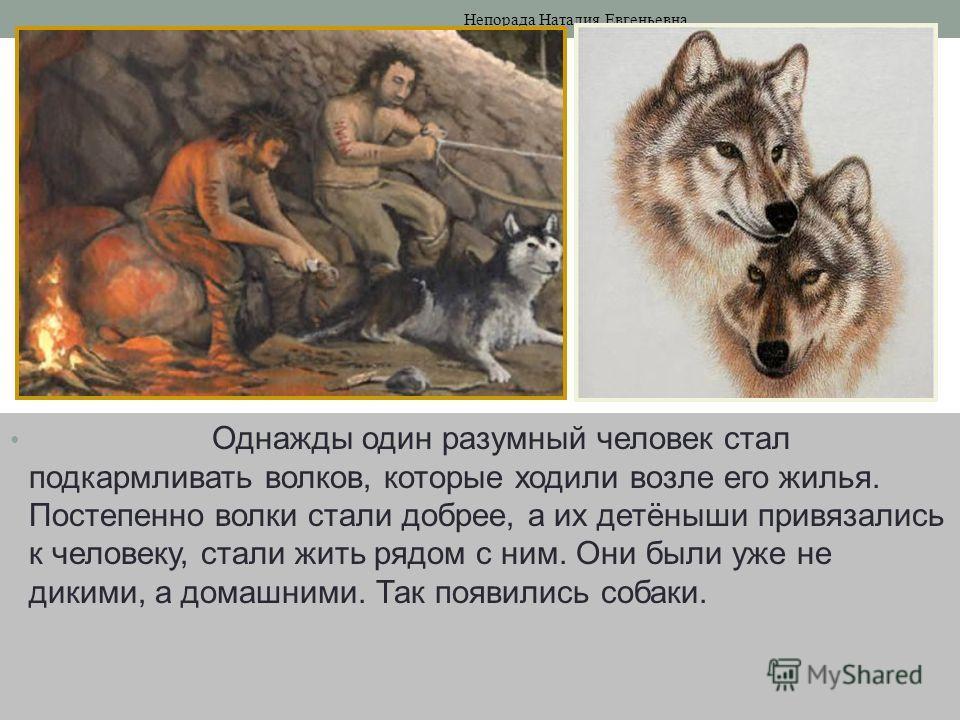 Однажды один разумный человек стал подкармливать волков, которые ходили возле его жилья. Постепенно волки стали добрее, а их детёныши привязались к человеку, стали жить рядом с ним. Они были уже не дикими, а домашними. Так появились собаки. Непорада
