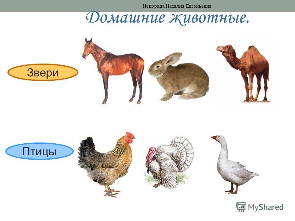 Звери Птицы Домашние животные. Непорада Наталия Евгеньевна