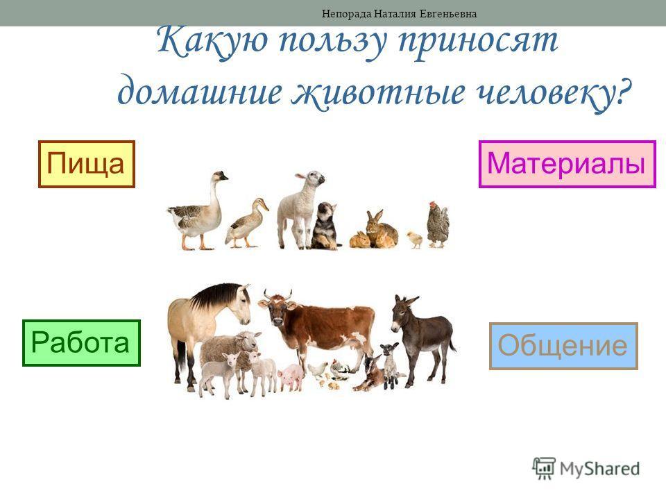 Какую пользу приносят домашние животные человеку? Пища Работа Материалы Общение Непорада Наталия Евгеньевна