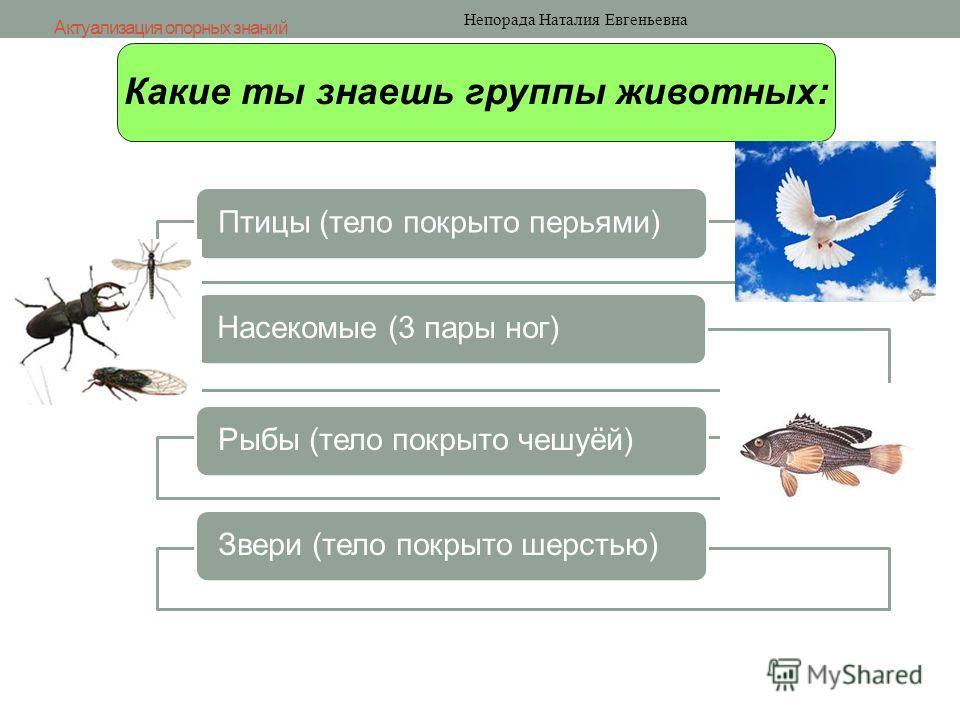 Какие ты знаешь группы животных: Актуализация опорных знаний Непорада Наталия Евгеньевна Птицы (тело покрыто перьями)Насекомые (3 пары ног)Рыбы (тело покрыто чешуёй)Звери (тело покрыто шерстью)