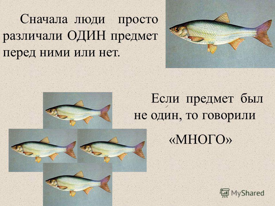 Сначала люди просто различали ОДИН предмет перед ними или нет. Если предмет был не один, то говорили «МНОГО»
