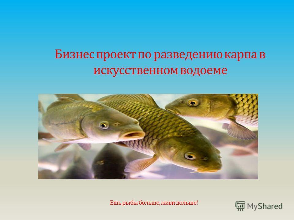 Бизнес проект по разведению карпа в искусственном водоеме Ешь рыбы больше, живи дольше!