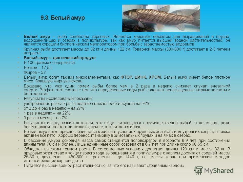 9.3. Белый амур Белый амур – рыба семейства карповых. Является хорошим объектом для выращивания в прудах, водохранилищах и озерах в поликультуре. Так как амур питается высшей водной растительностью, он является хорошим биологическим мелиоратором при