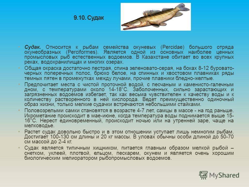 9.10. Судак Судак. Относится к рыбам семейства окуневых (Percidae) большого отряда окунеобразных (Perciformes). Является одной из основных наиболее ценных промысловых рыб естественных водоемов. В Казахстане обитает во всех крупных реках, водохранил