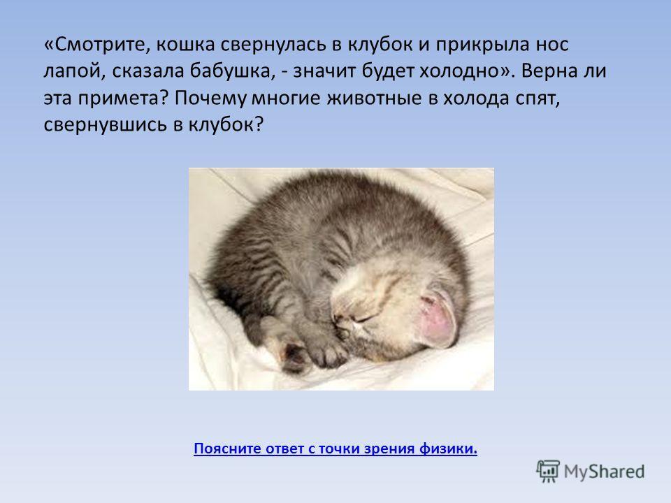 Поясните ответ с точки зрения физики. «Смотрите, кошка свернулась в клубок и прикрыла нос лапой, сказала бабушка, - значит будет холодно». Верна ли эта примета? Почему многие животные в холода спят, свернувшись в клубок?