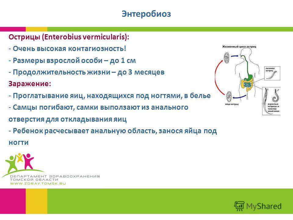 Энтеробиоз Острицы (Enterobius vermicularis): - Очень высокая контагиозность! - Размеры взрослой особи – до 1 см - Продолжительность жизни – до 3 месяцев Заражение: - Проглатывание яиц, находящихся под ногтями, в белье - Самцы погибают, самки выполза