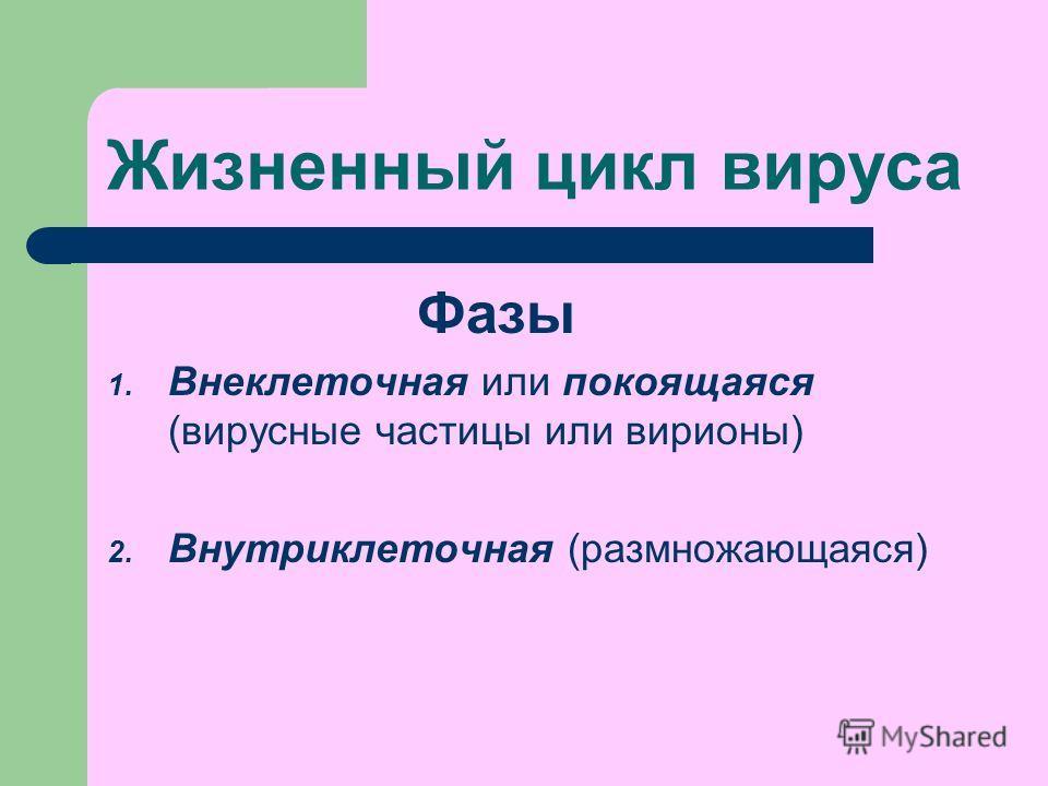 Жизненный цикл вируса Фазы 1. Внеклеточная или покоящаяся (вирусные частицы или вирионы) 2. Внутриклеточная (размножающаяся)