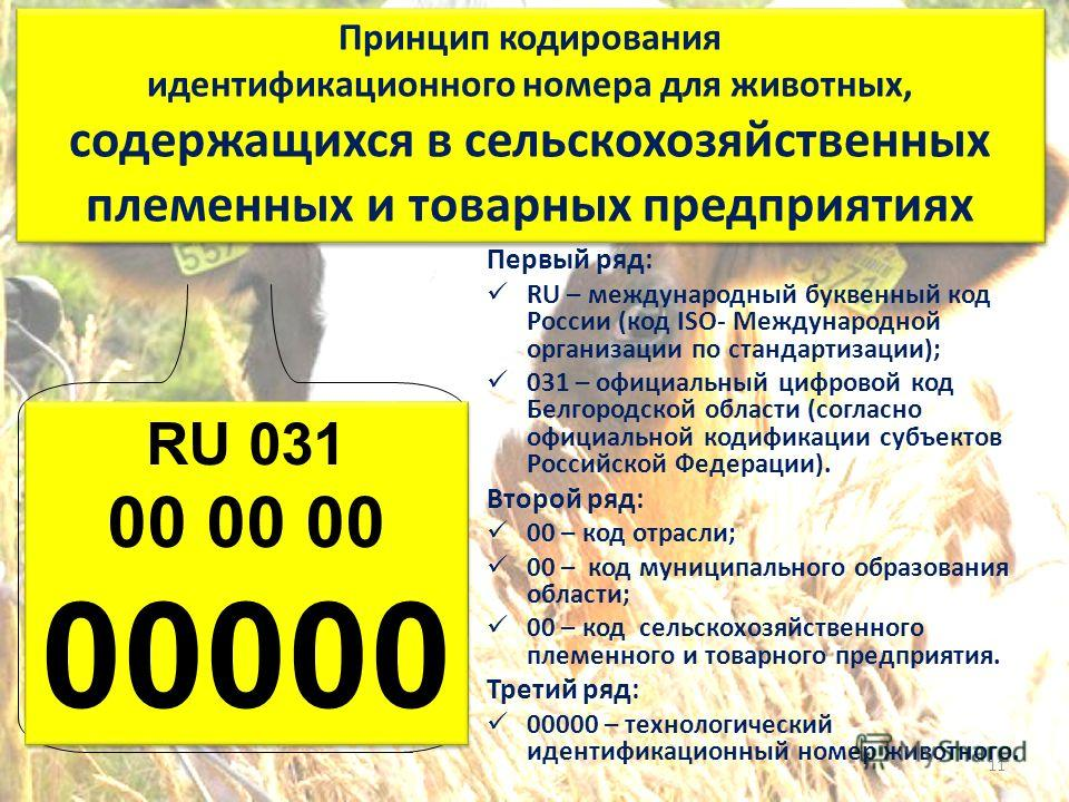 RU 031 00 00 00 00000 RU 031 00 00 00 00000 Первый ряд: RU – международный буквенный код России (код ISO- Международной организации по стандартизации); 031 – официальный цифровой код Белгородской области (согласно официальной кодификации субъектов Ро