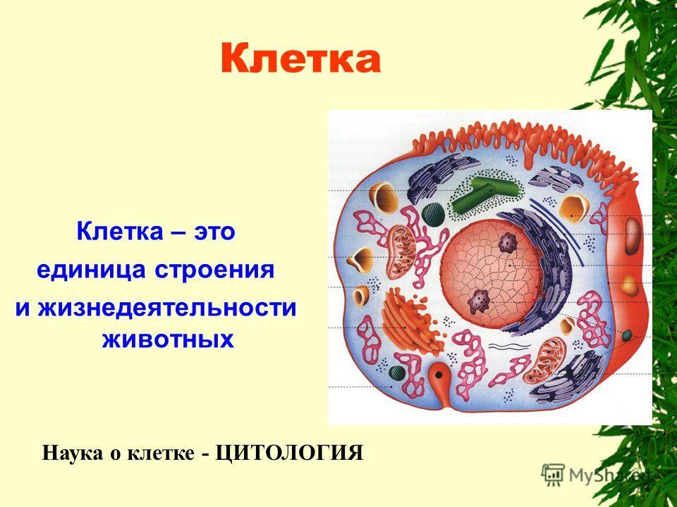 Клетка Клетка – это единица строения и жизнедеятельности животных Наука о клетке - ЦИТОЛОГИЯ