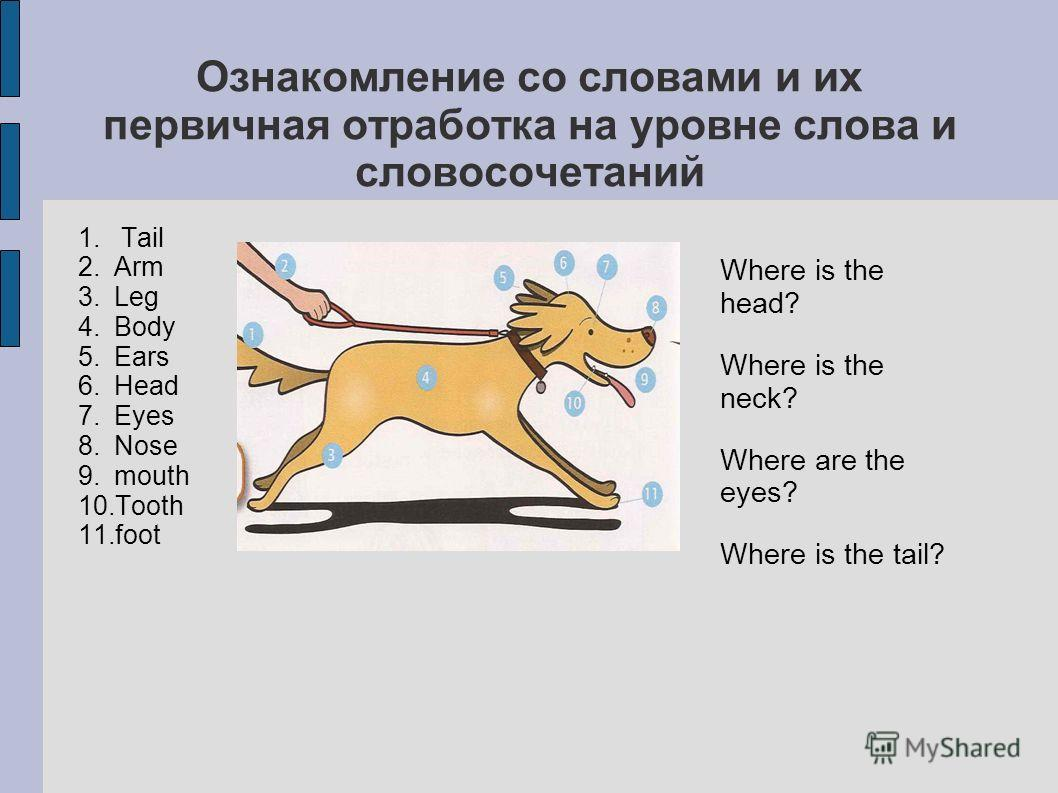 1. Tail 2. Arm 3. Leg 4. Body 5. Ears 6. Head 7. Eyes 8. Nose 9. mouth 10. Tooth 11. foot Where is the head? Where is the neck? Where are the eyes? Where is the tail?