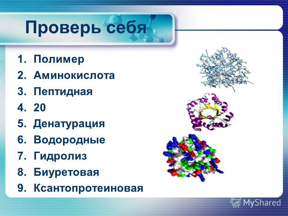 Проверь себя 1. Полимер 2. Аминокислота 3. Пептидная 4.20 5. Денатурация 6. Водородные 7. Гидролиз 8. Биуретовая 9.Ксантопротеиновая