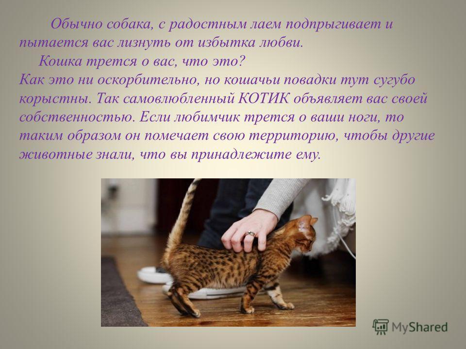 Обычно собака, с радостным лаем подпрыгивает и пытается вас лизнуть от избытка любви. Кошка трется о вас, что это? Как это ни оскорбительно, но кошачьи повадки тут сугубо корыстны. Так самовлюбленный КОТИК объявляет вас своей собственностью. Если люб