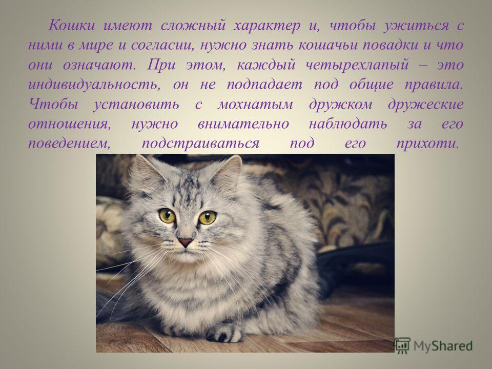 Кошки имеют сложный характер и, чтобы ужиться с ними в мире и согласии, нужно знать кошачьи повадки и что они означают. При этом, каждый четырехпалый – это индивидуальность, он не подпадает под общие правила. Чтобы установить с мохнатым дружком друже