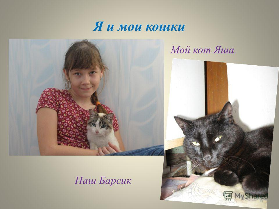 Я и мои кошки Мой кот Яша. Наш Барсик