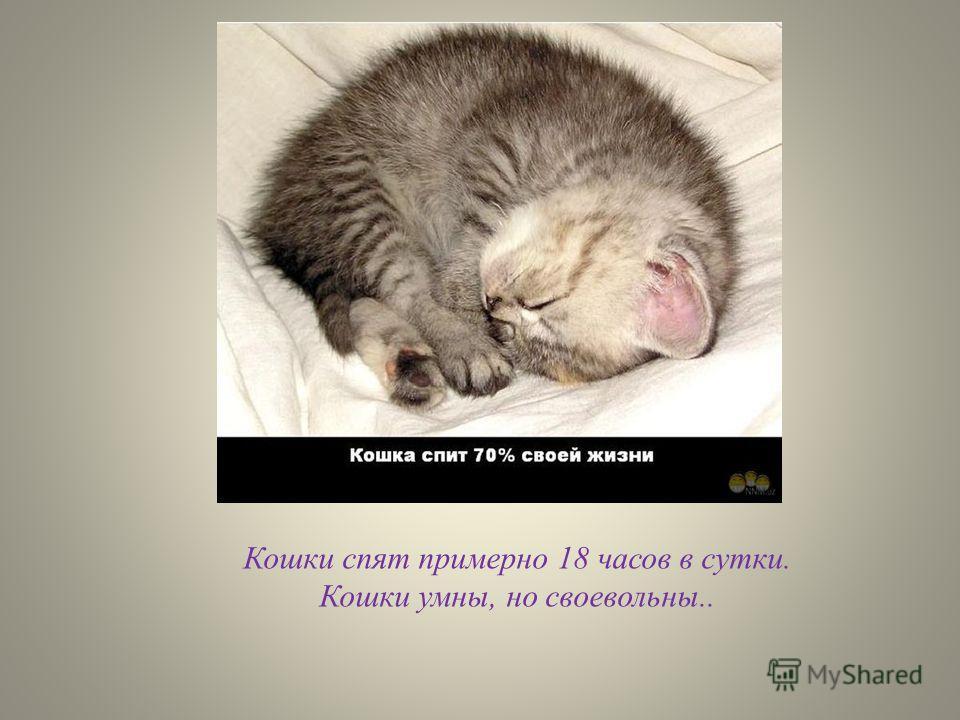 Кошки спят примерно 18 часов в сутки. Кошки умны, но своевольны..