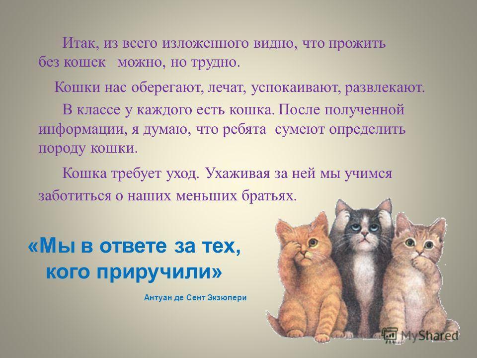 Итак, из всего изложенного видно, что прожить без кошек можно, но трудно. Кошки нас оберегают, лечат, успокаивают, развлекают. В классе у каждого есть кошка. После полученной информации, я думаю, что ребята сумеют определить породу кошки. Кошка требу