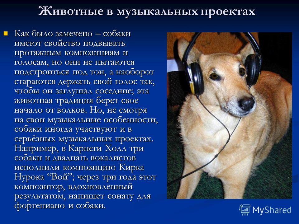 Животные в музыкальных проектах Как было замечено – собаки имеют свойство подвывать протяжным композициям и голосам, но они не пытаются подстроиться под тон, а наоборот стараются держать свой голос так, чтобы он заглушал соседние; эта животная традиц