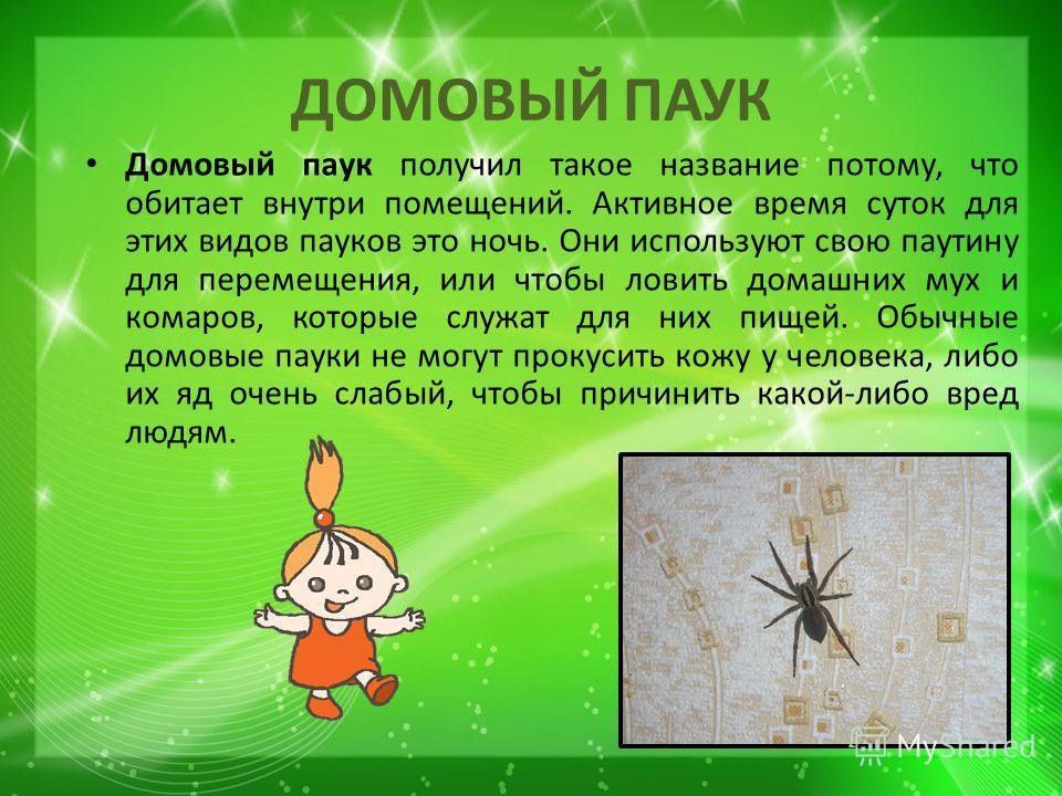 ДОМОВЫЙ ПАУК Домовый паук получил такое название потому, что обитает внутри помещений. Активное время суток для этих видов пауков это ночь. Они используют свою паутину для перемещения, или чтобы ловить домашних мух и комаров, которые служат для них п