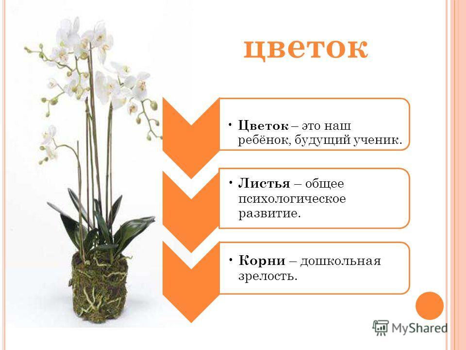 цветок Цветок – это наш ребёнок, будущий ученик. Листья – общее психологическое развитие. Корни – дошкольная зрелость.